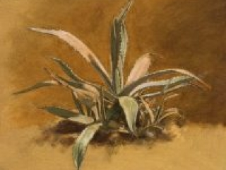 """Agave Study for S&T (oil on canvas-board, 16"""" X 20"""", 2006) Manny Cosentino, Paintings, Studies. Indirect painting methods, underpainting, wipeout, grisaille. Study of the agave plant seen in S&T on the lower left side of the portrait, just beyone the metal border of the deck. Pale cool greens, set against a warm umber background."""