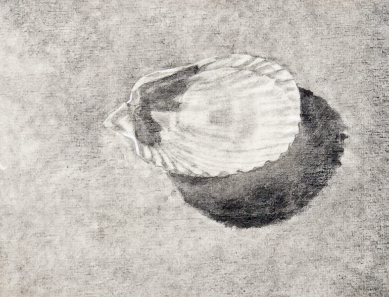 "Scallop Study 1 (pencil on paper, 9"" X 12"", 1981) Copyright © Manny Cosentino 1981. Drawings. Still life. Tonal drawing of a scallop shell on a table. Value relationships, light and shadow, cast shadow."